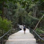 Woman walks on a path in the rainforest of Jamison Valley at the Blue Mountains in New South Wales Australia.