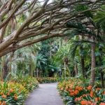 Things To See And Do At The Royal Botanical Gardens Sydney