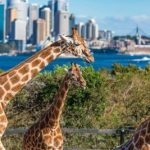 A Taronga Zoo Tourism Destination