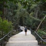 A Blue Mountains Australia Tourism Adventure